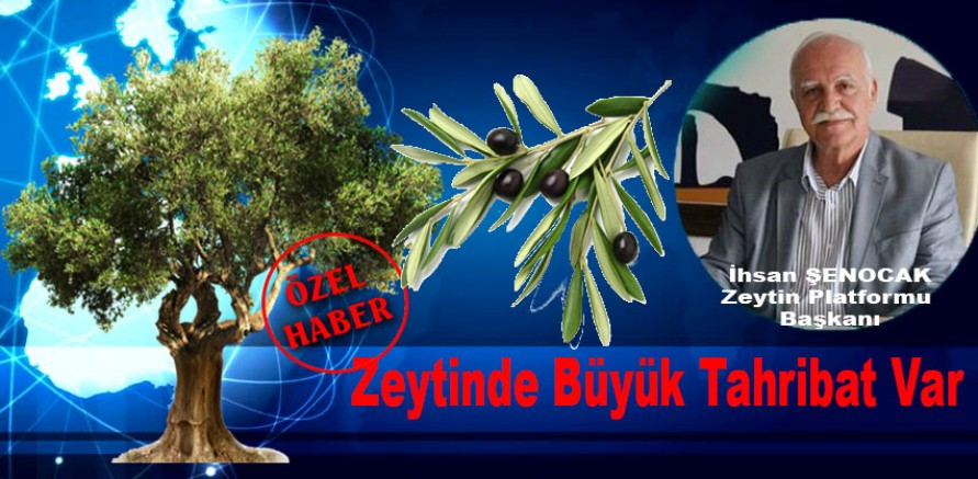 """Şenocak;""""Zeytinde Büyük Tahribat Var"""""""