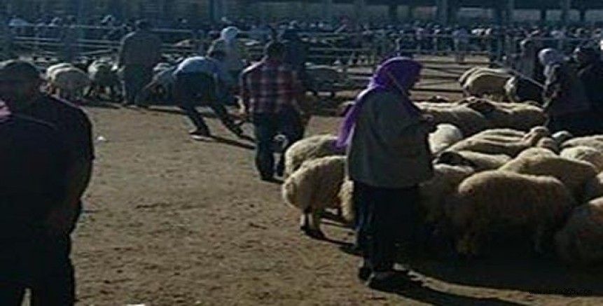 Urfa'da Hayvan Pazarı kaç gün açık olacak?